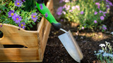 Gardening. Garden Tools and Crate Full of Gorgeous Plants Ready for Planting. Spring Garden Works Concept. Garden Landscaping small business start up. - 218740363