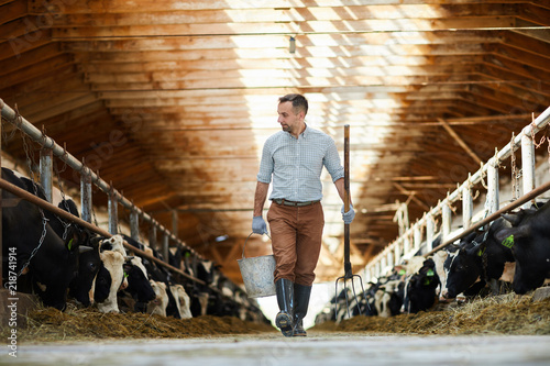 Young worker of kettlefarm with bucket and hayfork walking along two stables with dairy cows - 218741914