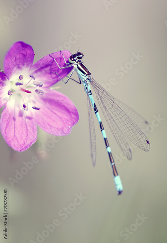 canvas print picture Dragonfly