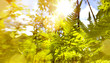 Art abstract September sunny autumn nature background
