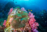 Clownfish on a colorful tropical coral reef