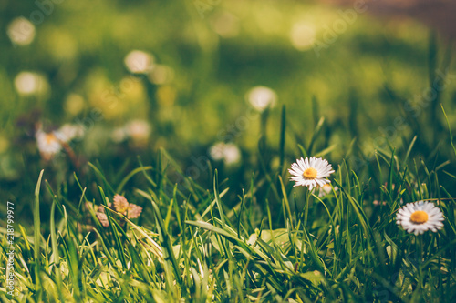 Solar lawn with white flowers buy photos ap images detailview solar lawn with white flowers mightylinksfo