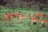 A herd of antelopes at Crater Lake Game Sanctuary, Naivasha - 218813737