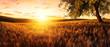 Leinwandbild Motiv Sonnenuntergang auf einem goldenen Weizenfeld