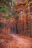 Pathway in the autumn forest - 218824117