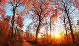 Autumn scenery with red foliage and blue sky