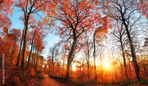 Autumn scenery with red foliage and blue sky - 218824562