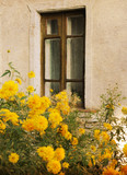window, old window, house, yellow flowers near the window, yellow flowers, architecture,  old wall, building