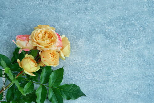 Beautiful yellow-pink roses on blue background. Top view, copy space.