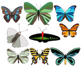 isolated, set of beautiful butterflies