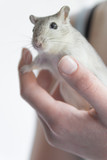 Child holding a gerbil