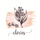 Cloves sketch on watercolor paint. Vector black vintage engraving illustration Vector design for tags, cards, packaging, promo - 218946352