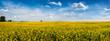 big panoramic view of Rape Field in Ukraine
