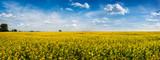 big panoramic view of Rape Field in Ukraine - 218983981