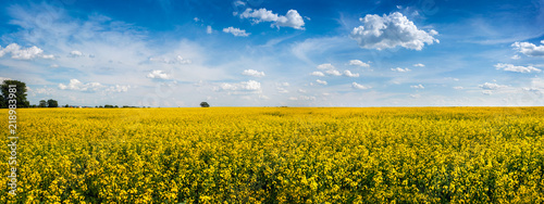 big panoramic view of Rape Field in Ukraine - 218983981