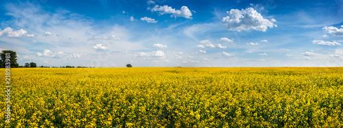 Foto Murales big panoramic view of Rape Field in Ukraine