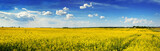 panoramic view of Rape Field in Ukraine