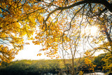 Beautiful, golden autumn scenery with trees and golden leaves in the sunshine in Scotland - 218993158