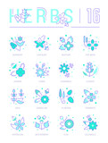 Set Blue Line Icons of Herbs