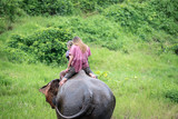 Elephant trekking Group tourists ride travel through jungle in forest Chiang mai, thailand - 218997503