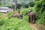 Elephant trekking Group tourists ride travel through jungle in forest Chiang mai, thailand - 218999961