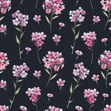 Watercolor floral phlox pattern - 219008739