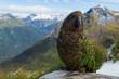 Leinwandbild Motiv Kea Papagei auf dem Kepler-Track vor Gebirge; Fjordland National Park, Neuseeland