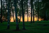 Park in golden hour light
