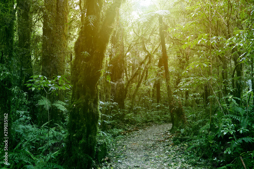 Forest walking trail