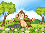 Monkey in beautiful nature