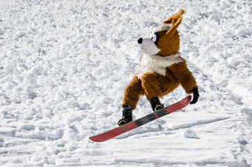 dog snowboard