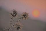 luxury sunrise background