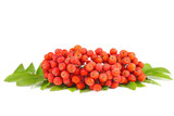 Rowan berries with leaves isolated on white background - 219083106
