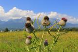 burr plant on mountain meadow - 219092543