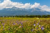 flower meadow in mountains - 219092549