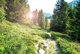 sentiero in alta montagna