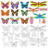 vector, isolated, insect set of butterflies and dragonflies, coloring book