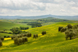 Landscape in Tuscany, Italy - 219127713
