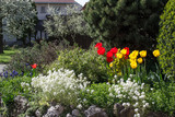Tulpen in Blumenbeet