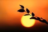 tree twig in sunset light - 219146322