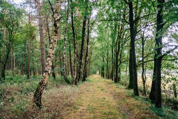 Waldspaziergang mit Hund im Forst im Sommer © Till Junker