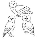 Owls  set. Vector  illustration.
