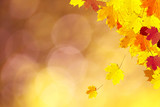 Sunny colorful autumn season leaves decoration on nature bokeh background. Selective focus used. - 219197729