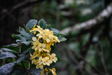 yellow swamp flowers - 219212561