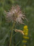 wild strange flower