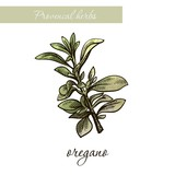 oregano. natural spices and herbs. sketch on white - 219230178