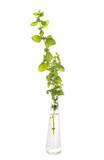 melissa in test tube - 219235771