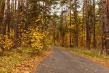Road in the forest in autumn as a background