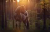 Pferd im Wald - 219251766