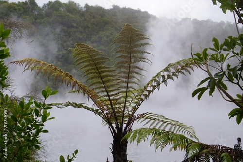 Tree fern crown in front of a steaming hot spring